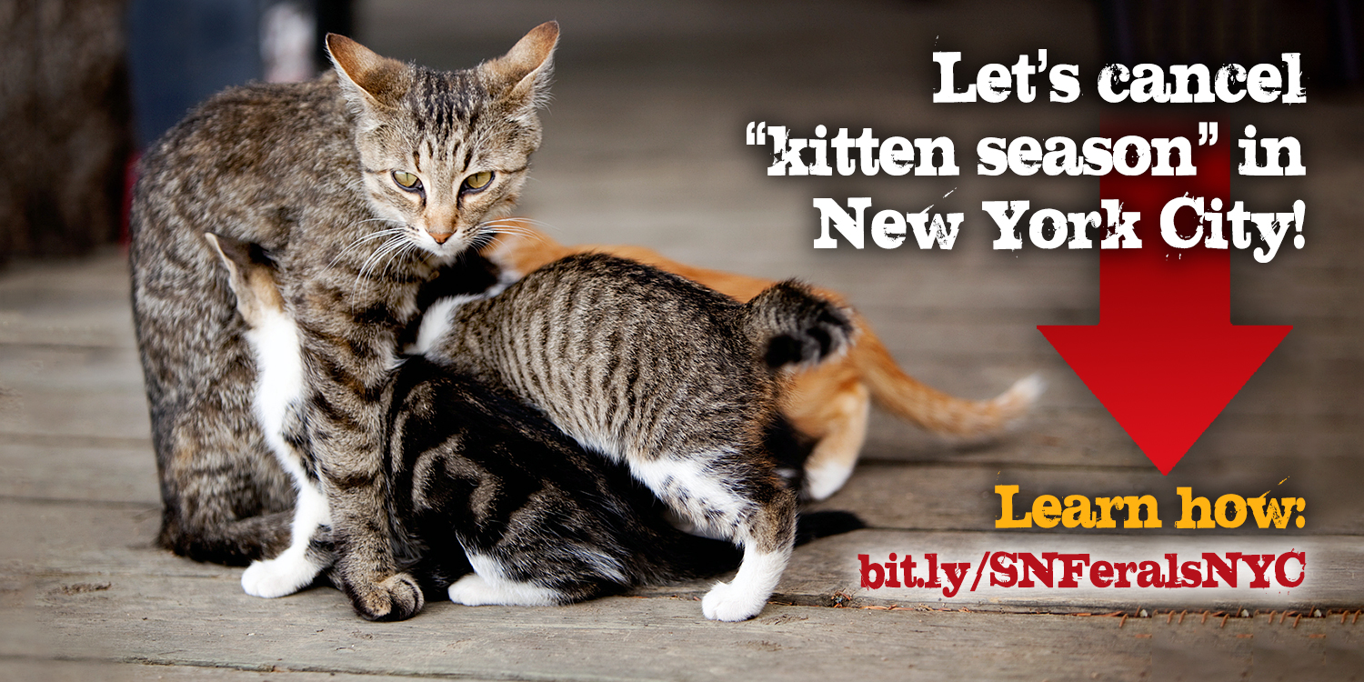 Kittens are cute, but kitten season is a tragedy. Learn how you can help.