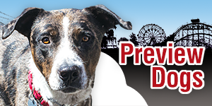 Adoption Centers For Dogs On Long Island