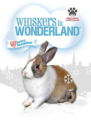 Rabbits for Adoption from Whiskers in Wonderland Groups