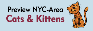 Preview NYC-Area Cats & Kitties