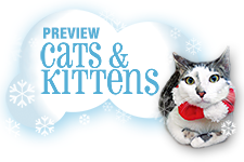 Preview Cats & Kittens