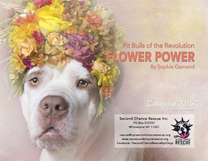 Second Chance Rescue: Flower Power, Pit Bulls of the Revolution by Sophie Gamand Calendar 2015