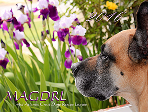 Mid-Atlantic Great Dane Rescue League: 2016 MAGDRL Calendar
