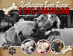 Northeastern Boxer Rescue: 2016 Calendar
