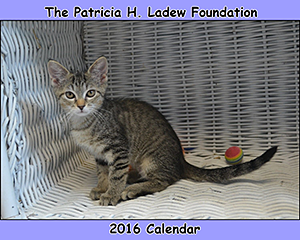 The Patricia H. Ladew Foundation: 2016 Cat Calendar