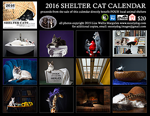 Westchester County Shelters: 2016 Shelter Cat Calendar