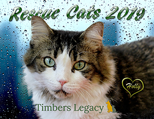 Timber's Legacy: Rescue Cats 2019