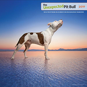 The Unexpected Pit Bull: 2019 Wall Calendar
