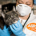 ACC Cats Quarantined for H7N2 Virus Receive Care, Monitoring at ASPCA Temporary Shelter