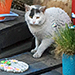 Networking to Find Help in Caring for Community Cats