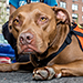 NYC Achieves 90% Animal Shelter Live Release Rate for Second Year
