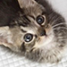 Provide Healing, Health, Homes for NYC's Kittens