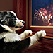 Protect Your Pets from Fourth of July Fireworks & Sizzling Summer Temperatures