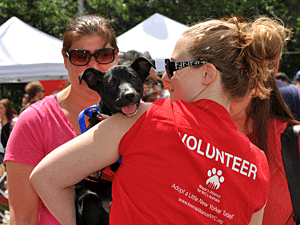 A volunteer shows off an adoptable dog at a Mayor's Alliance Adoptapalooza event in Washington Square Park. (Photo by Dana Edelson)