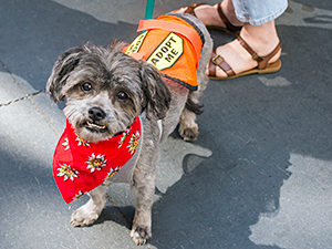 Produced by Dogbooties.com, orange 'Adopt Me' vests are great tools for APOs and foster care providers to use to identify animals available for adoption. (Photo by Bille Axell)