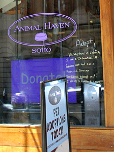 Animal Haven is just one Alliance Participating Organization (APO) with regular adoption hours at its SoHo shelter, training center, and store. (Photo by Krista Menzel)