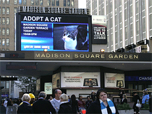 In October, the Mayor's Alliance for NYC's Animals sponsored the annual Adopt-A-Cat cat adoption event held in conjunction with the CFA-Iams Cat Championship. (Photo by Rick Edwards)