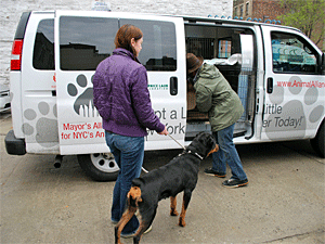 During 2013, our Wheels of Hope program transported more than 13,700 animals from AC&C to rescue groups and shelters, adopters, foster caretakers, and veterinary clinics. (Photo by Krista Menzel)