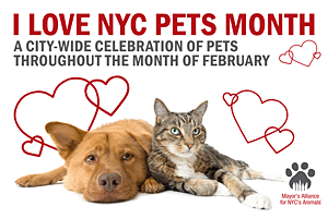 I Love NYC Pets Month