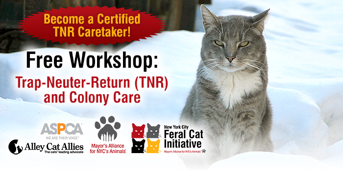 Slide 3 Free Work Trap Neuter Return Tnr And Colony Care