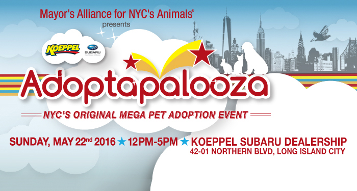 Adoptapalooza Long Island City - Sunday, May 22, 2016