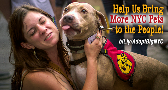 Help Us Bring More NYC Pets to the People!