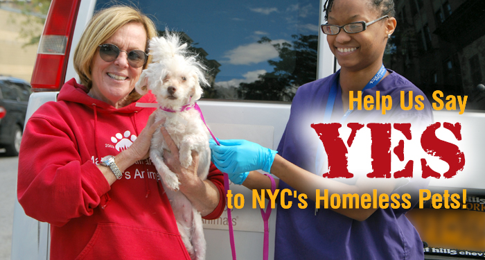 Help Us Say YES to NYC's Homeless Pets!
