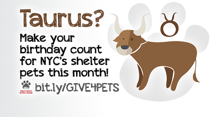 Taurus? Make your birthday count for NYC's shelter pets this month!