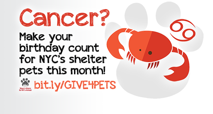Cancer? Make your birthday count for NYC's shelter pets this month!