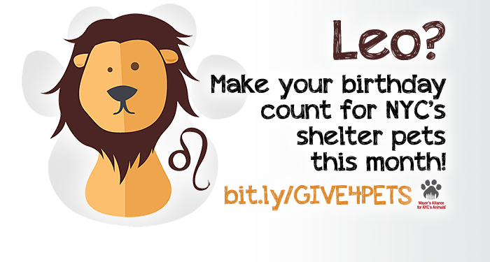 Leo? Make your birthday count for NYC's shelter pets this month!