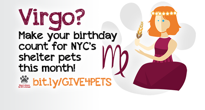 Virgo? Make your birthday count for NYC's shelter pets this month!