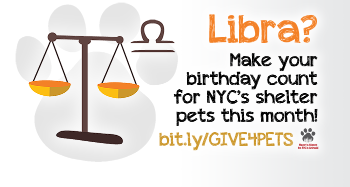 Libra? Make your birthday count for NYC's shelter pets this month!