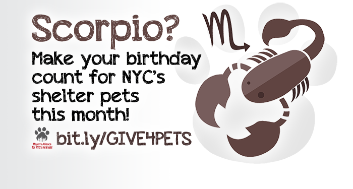 Scorpio? Make your birthday count for NYC's shelter pets this month!