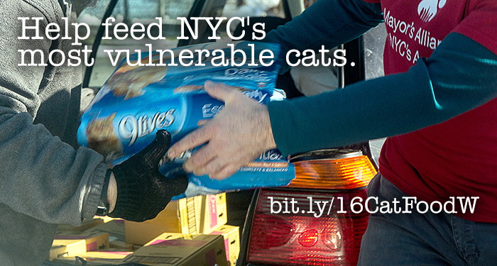 Help feed NYC's most vulnerable cats.