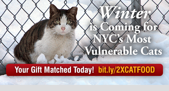 Winter is Coming for NYC's Most Vulnerable Cats