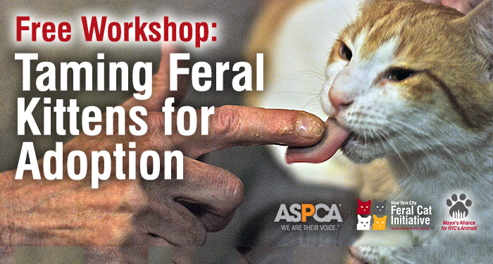Free Workshop: Taming Feral Kittens for Adoption