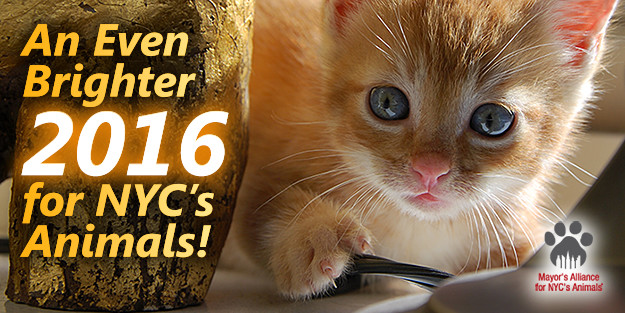 An Even Brighter 2016 for NYC's Animals!