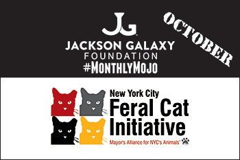 Jackson Galaxy Foundation Monthly Mojo - October 2016 - NYC Feral Cat Initiative