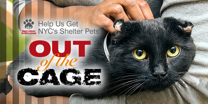 Help Us Get NYC's Shelter Pets Out of the Cage
