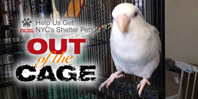 Help NYC's Shelter Pets Get Out of the Cage