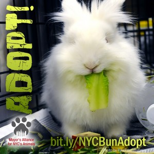 Adopt a Rabbit! (Photo by PawPrintsByDave)