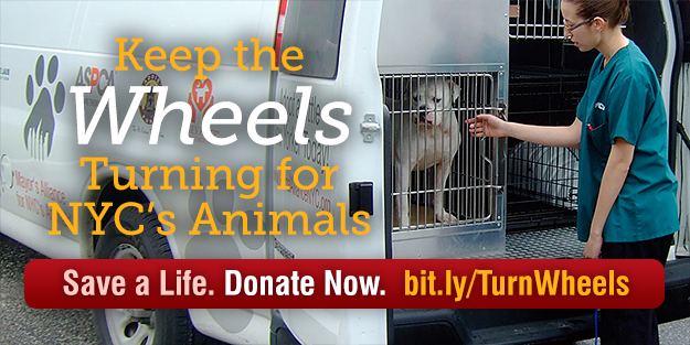 Keep the Wheels Turning for NYC's Animals
