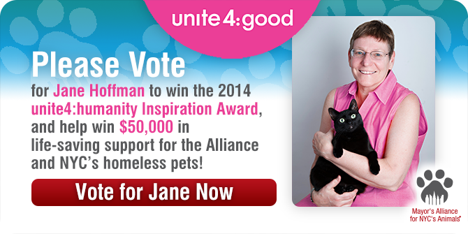 Vote for Jane Now!