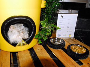 Rescued cat Martini tries out the winning shelter designed by Kathryn Walton, founder of The American Street Cat, Inc., and Co Adaptive Architecture. (Photo by Dana Edelson)