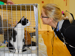 Whiskers in Wonderland provides New Yorkers with a fun opportunity to meet hundreds of cats, kittens, rabbits, and other apartment-perfect pets from area adoption organizations looking for their homes for the holidays. (Photo by Dana Edelson)