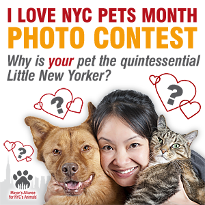 I Love NYC Pets Month Photo Contest