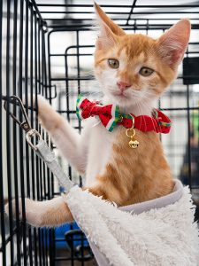 Garfield from NYC Teens for Animals was just one of hundreds of animals who found new homes at Adoptapalooza in Union Square Park, Manhattan, on Sunday, September 16, 2018. (Photo by Joe Galka)