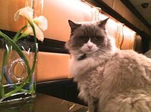 Matilda the Algonquin Cat welcomed guests to her fundraiser for the Mayor's Alliance for NYC's Animals. (Photo by Sandy Robins)
