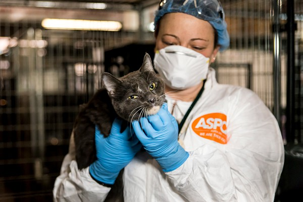 (Photo by ASPCA)