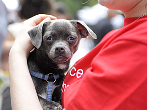 Your tax-deductible end-of-year donation will help save the lives of cats and dogs in New York City in 2012. (Photo by Dana Edelson)